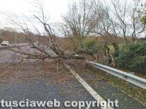 Maltempo - Un albero sulla strada
