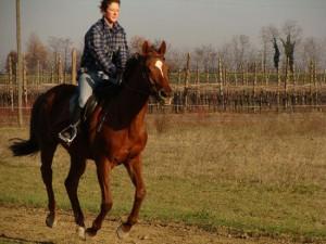 Un cavallo