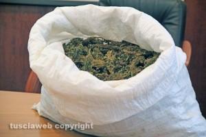 Marijuana già essiccata - foto di repertorio