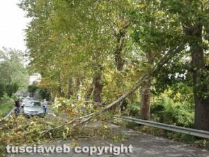 Viterbo - L'albero caduto sulla Cassia Sud