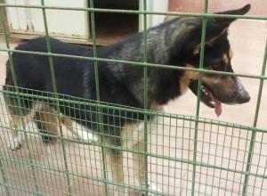 Viterbo - Ritrovato cane
