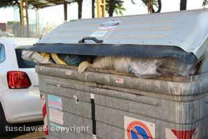 Il cassonetto di via Solieri dove è stato ritrovato il feto