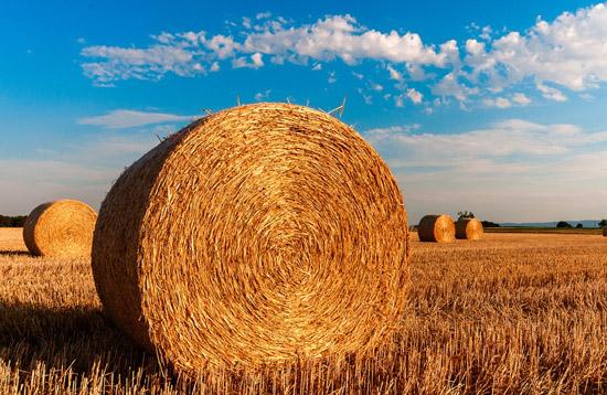 L'agricoltura laziale