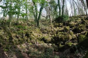 Farnese - Selva del Lamone