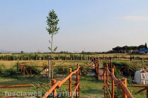 Viterbo - Il parco termale Bagnaccio