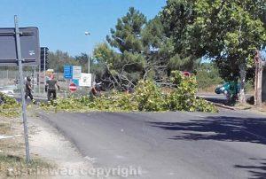 Un albero abbattuto dal vento - vigili del fuoco al lavoro