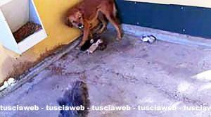 Viterbo – Cuccioli affogati e gettati nell'immondizia in un canile