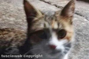 Viterbo - La gattina trovata