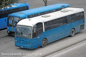 Alcuni bus Cotral a Riello