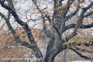 Viterbo - I primi fiocchi di neve