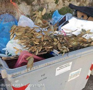 Viterbo - Cassonetti per la plastica in località Merlano