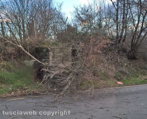 Un albero caduto