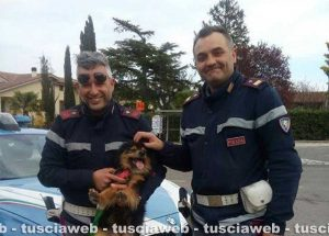 Viterbo - Poliziotti salvano cane in superstrada