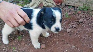 Cuccioli in cerca di adozione