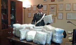 Tuscania - 64 chili di marijuana in un casale - La droga sequestrata