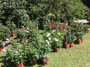 Viterbo - Orto botanico - Verdi e contenti