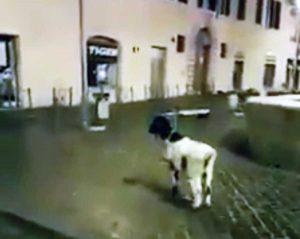 Roma - La capra in largo Argentina