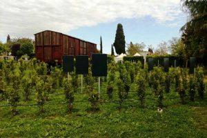 Tarquinia - Il Labirinto della Memoria alla Cittadella di Semi di pace