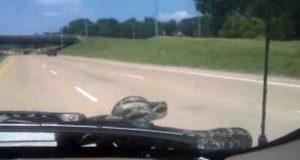 Un serpente su un'auto - foto d'archivio