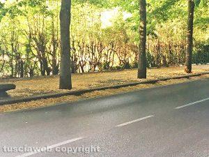 Viterbo - Viale Trieste invasa dalle foglie