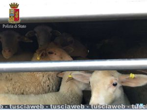 167 agnelli e capretti stipati in un tir per oltre 10 ore