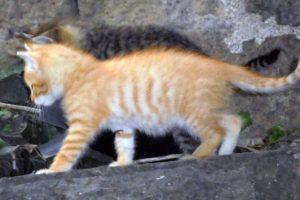 Viterbo - I due gattini