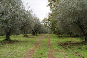 Ordinanza del comune sull'uso sostenibile dei prodotti fitosanitari
