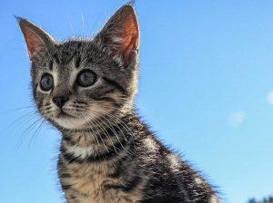 Gattino sul cornicione