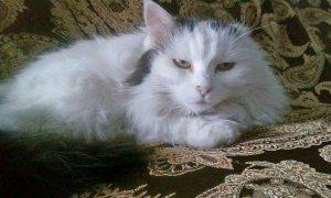La gatta Nina