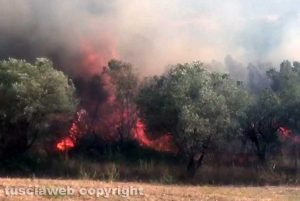Bosco in fiamme