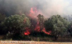 Bosco in fiamme