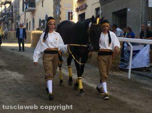 Scontroso - Cavallo di San Savero