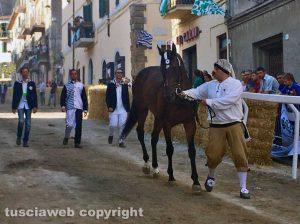Qumersindo - cavallo la pace