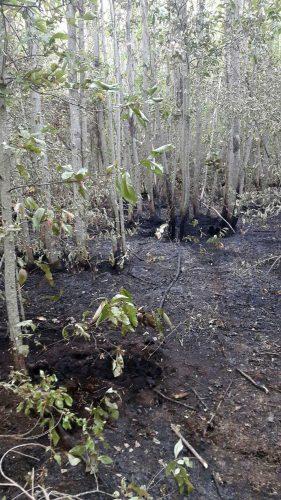 Il bosco incendiato