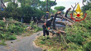 Roma - Pino crolla sulla Cassia
