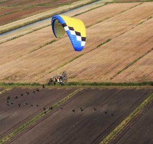 Orbetello - Stormo di ibis in volo dall'Austria verso l'oasi guidati da due ragazze