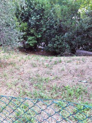Viterbo - Degrado in un campo di via Amedeo Cerasa