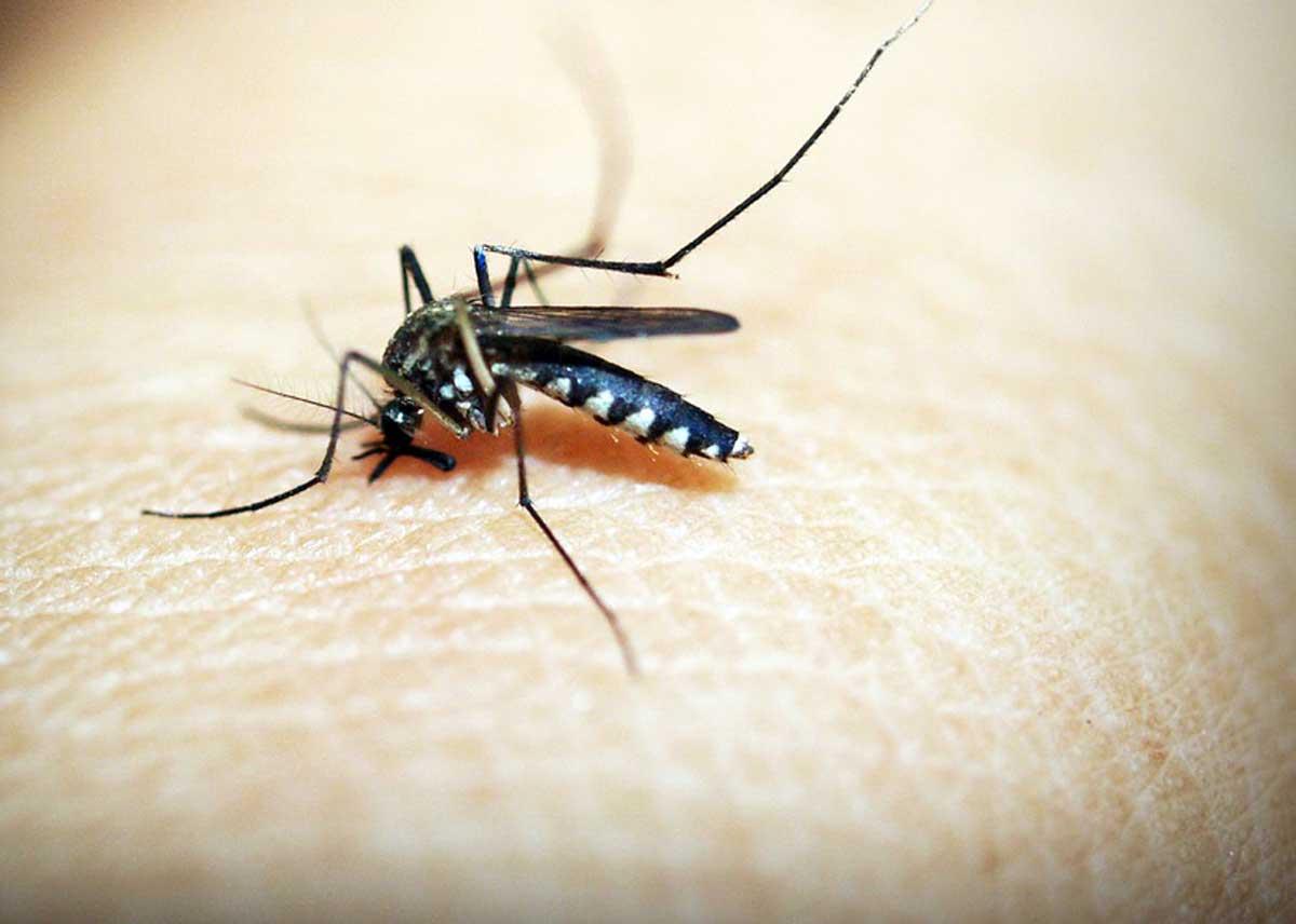 Bambina morta di Malaria: contagio in Ospedale a Trento? Lorenzin: