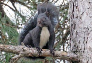 Uno scoiattolo meridionale
