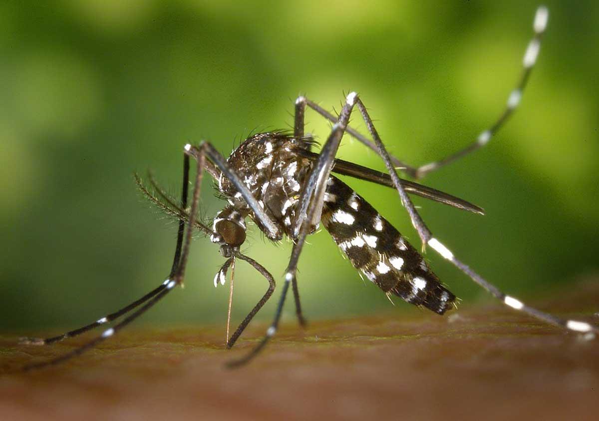Caso Chikungunya: ritardi a Roma su come intervenire