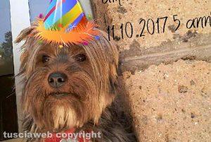 Viterbo - Il cane Sansone