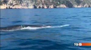 Il video delle balene finito sul Tg5 nell'edizione serale del 21 ottobre