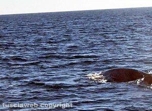 Balena nel porto di Civitavecchia