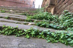 Viterbo - La scalinata che da via Sant'Antonio conduce a piazza della Morte