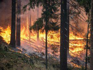 Bosco - Incendio