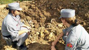 I carabinieri forestali trovano carcasse di cavalli smaltite illegalmente