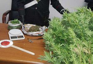 La droga e i soldi sequestrati dai carabinieri di Ladispoli