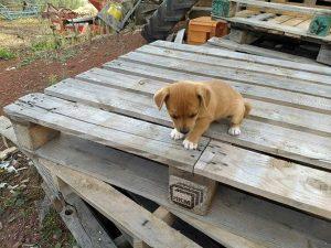 Cucciola cerca casa
