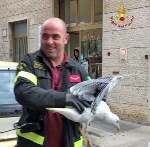 Civitavecchia - Il gabbiano liberato dai pompieri