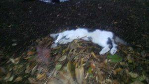 Un gatto ucciso col veleno a Civitella D'Agliano